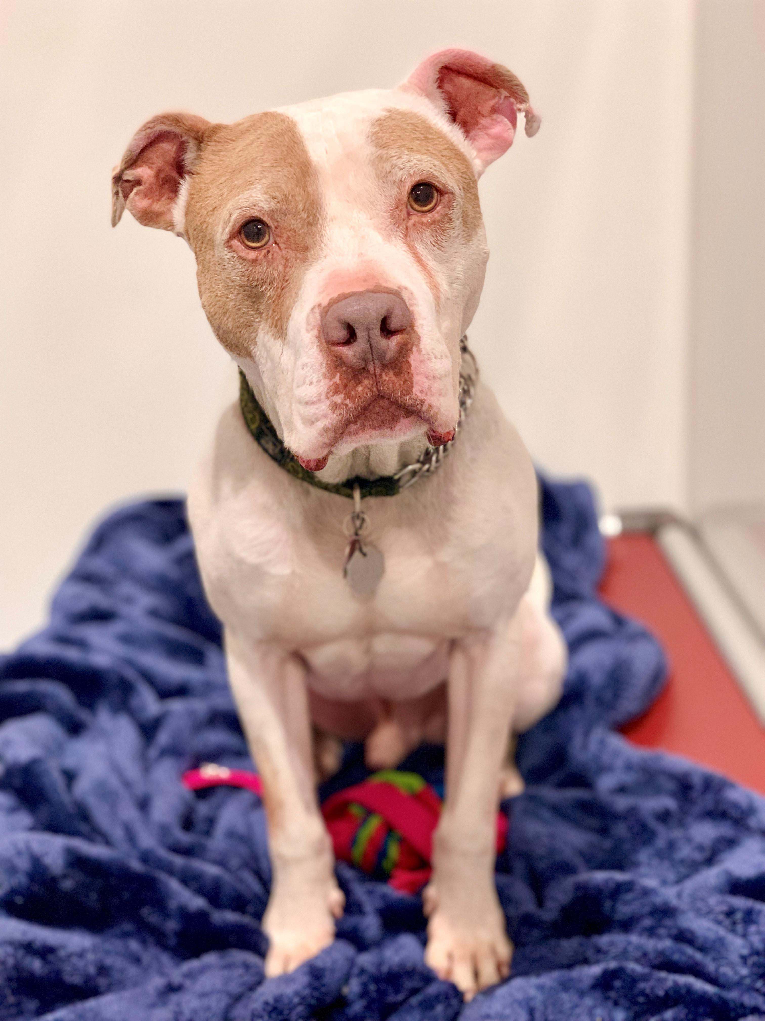 Dogs - Emerald City Pet Rescue