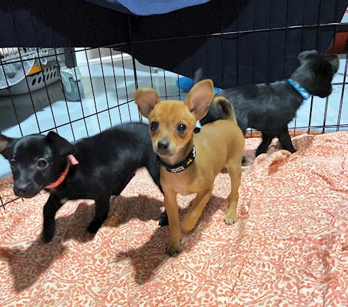 Dogs Emerald City Pet Rescue
